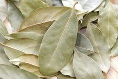 Folhas de louro Fotografia de Stock