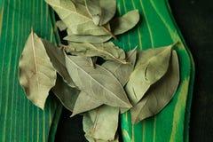 Folhas de louro Imagem de Stock Royalty Free