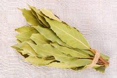 Folhas de louro Imagem de Stock