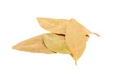 Folhas de louro aromáticas no fundo branco Fotografia de Stock