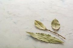 Folhas de louro aromáticas no fundo branco Fotografia de Stock Royalty Free