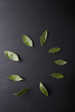 Folhas de louro em um fundo preto Folha de louro Grinalda do louro Imagens de Stock