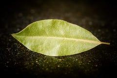 Folhas de louro em uma mesa de mármore preta Imagens de Stock