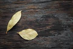 Folhas de louro no fundo de madeira Imagem de Stock
