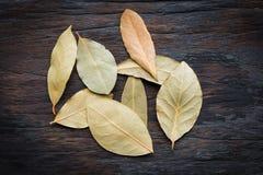 Folhas de louro no fundo de madeira Fotografia de Stock Royalty Free