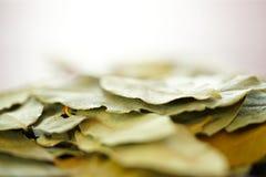 Folhas de louro que cozinham ervas e o close up macro das especiarias, foco seletivo Imagens de Stock