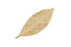 Folhas de louro secadas Foto de Stock Royalty Free