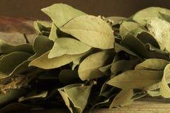 Folhas de louro secadas, prontos para uso no cozimento Imagens de Stock