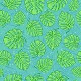 Folhas de Monstera Imagens de Stock