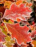 Folhas de novembro Fotos de Stock Royalty Free