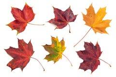 Folhas de outono 1 Fotografia de Stock