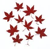 Folhas de outono Imagens de Stock