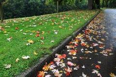 Folhas de outono fotos de stock royalty free