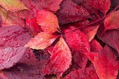 Folhas de outono Foto de Stock