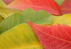 Folhas de outono Fotografia de Stock