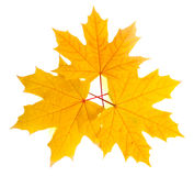 Folhas de outono fotografia de stock royalty free