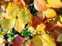 Folhas de outono fotos de stock