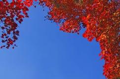 Folhas de outono. Imagem de Stock Royalty Free