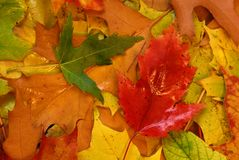 Folhas de outono. Imagem de Stock