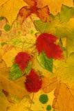 Folhas de outono. Imagens de Stock