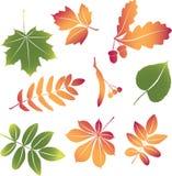 Folhas de outono ajustadas do vetor Fotografia de Stock Royalty Free