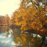 Folhas de outono alaranjadas Fotos de Stock Royalty Free