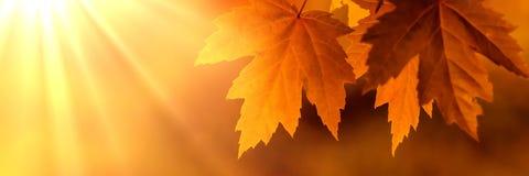 Folhas de outono alaranjadas fotos de stock