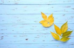 Folhas de outono alaranjadas na tabela azul Dia da acção de graças imagens de stock royalty free