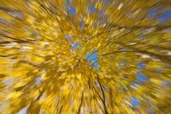 Folhas de outono amarelas Fotografia de Stock