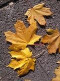 Folhas de outono amarelas Fotos de Stock Royalty Free
