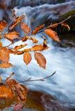 Folhas de outono amarelas do ramo que penduram sobre o rio da montanha com água azul imagens de stock royalty free