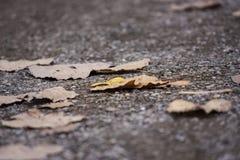 Folhas de outono, folhas amarelas na estrada imagens de stock royalty free
