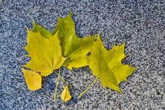 Folhas de outono amarelas no parapeito do pavimento fotografia de stock