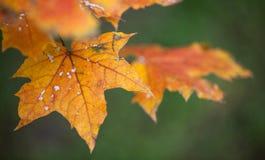 Folhas de outono amarelas no parque no fundo verde Imagem de Stock Royalty Free
