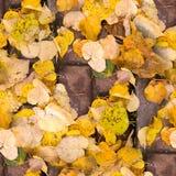 Folhas de outono amarelas sem emenda nas telhas do passeio Fundo fotografia de stock