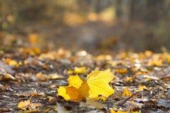Folhas de outono bonitas Fotos de Stock