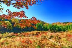 Folhas de outono bonitas em Akita Nyuto Onsenkyo fotografia de stock