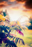 Folhas de outono bonitas no fundo exterior da natureza do por do sol da queda Fotos de Stock