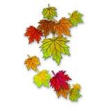 Folhas de outono bonitas que caem para baixo Fotos de Stock