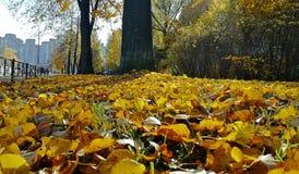 Folhas de outono caídas fotografia de stock