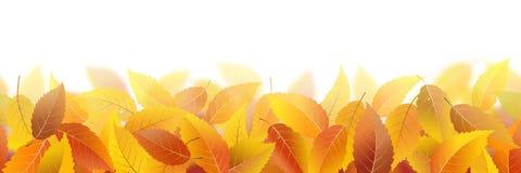 Folhas de outono caídas ilustração do vetor