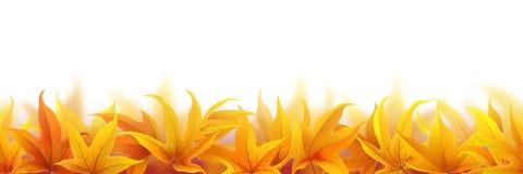 Folhas de outono caídas ilustração royalty free