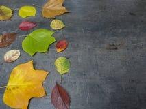 Folhas de outono caídas amarelas e verdes vermelhas coloridas no gra do grunge Foto de Stock