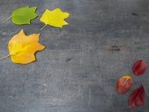 Folhas de outono caídas amarelas e verdes vermelhas coloridas no gra do grunge Foto de Stock Royalty Free