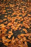 Folhas de outono caídas na terra Forest Foliage foto de stock
