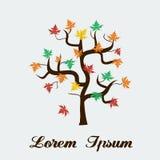 Folhas de outono Canadá da árvore de bordo do vetor Fotos de Stock Royalty Free