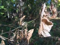 Folhas de outono, close-up Foto de Stock