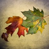 Folhas de outono coloridas Imagens de Stock