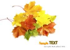 Folhas de outono coloridas Fotos de Stock Royalty Free