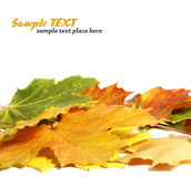 Folhas de outono coloridas Fotos de Stock
